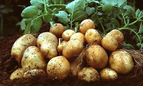 Potatoes cultivated in 130 Hectares in Jaffna, says Director of Agriculture, Jaffna