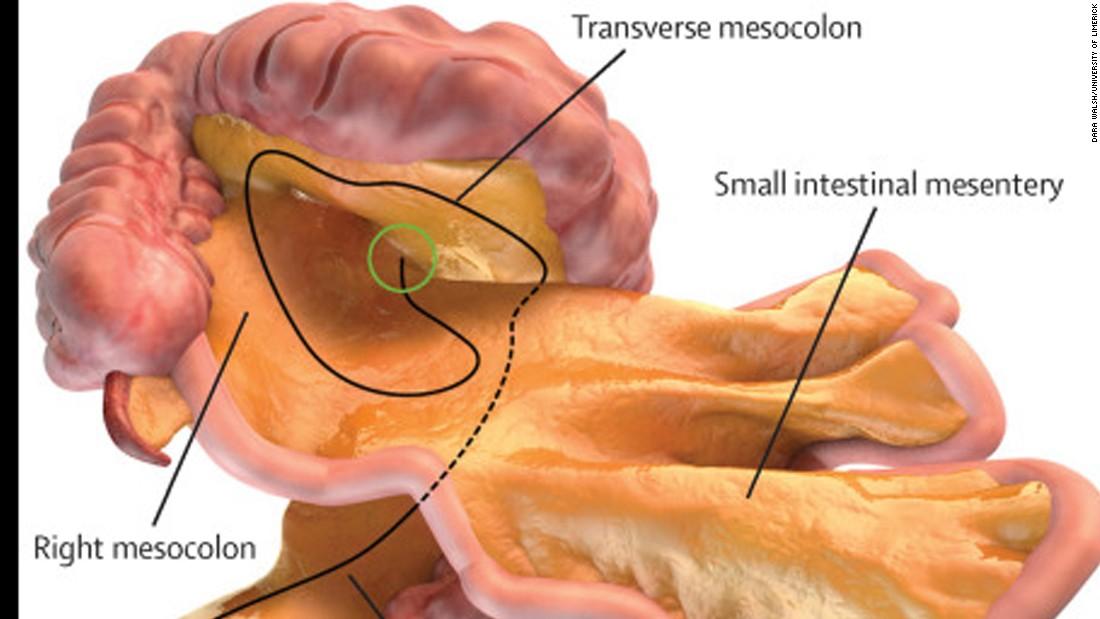 Messentry as Gut brain or Abdominal Hypothalamus