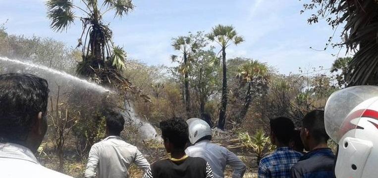 Several acres of jungles in Ponnalai Thiruwadinilai burnt down in jungle fire