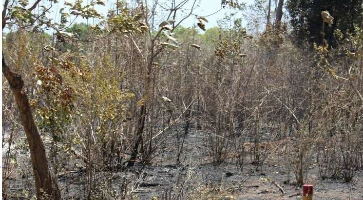 Is the burning of Koolamurippu forest a deliberate act? Raviharan demands immediate inquiry