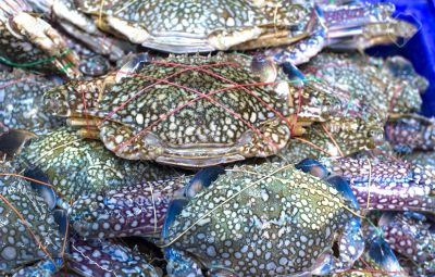 Flower crab, Blue crab, Blue swimmer crab, horse crab for sale