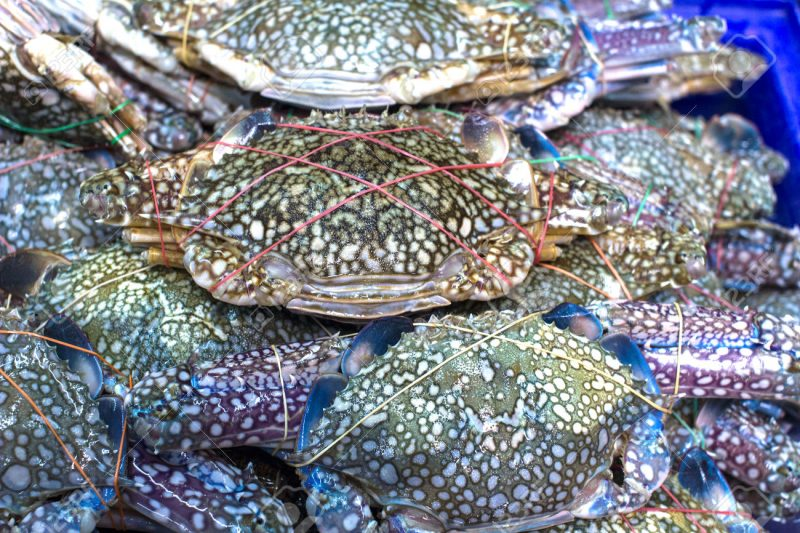 Blue Swimming Crabs – New target for southern companies: accuse Island fishermen