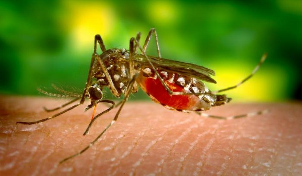 Malaria mosquitoes have reached Jaffna