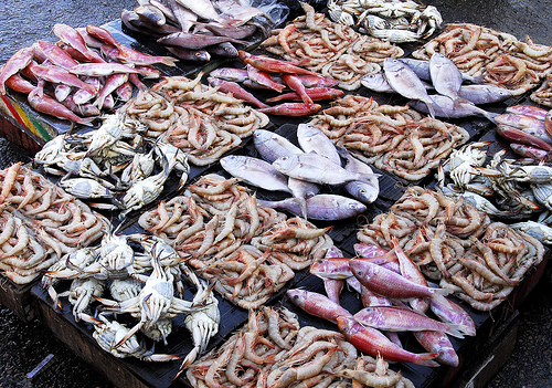 Local consumers in Jaffna deprived of Sea Food