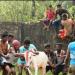 Subduing Bulls 4