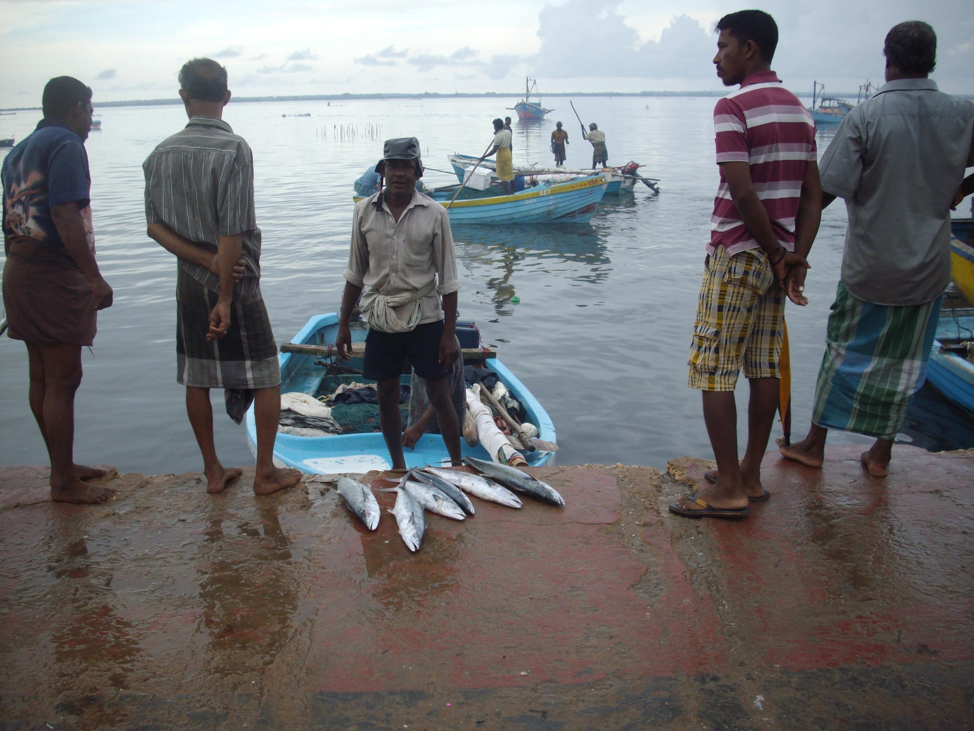 Fish harvest increased in Jaffna