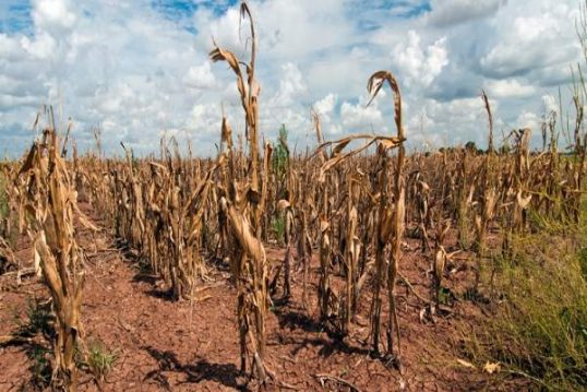 100,000 people affected by the prolonging drought, says the Disaster Management Centre