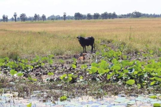 75,199 persons affected by the drought in Mannar: Remedying activities intensified, says Disaster Management centre