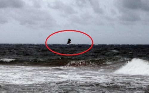 Giant bird sighted flying away over seas of Mulaitheevu