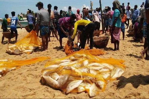 Fisherman from Udappu, Puttalam blessed on the Vadamaradchchi beach with Rs. 15 Million catch