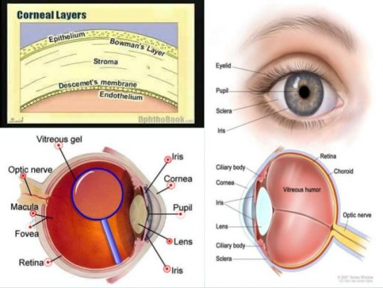 The Vanni disaster caused permanent Corneal damages: Dr. Jamunanantha