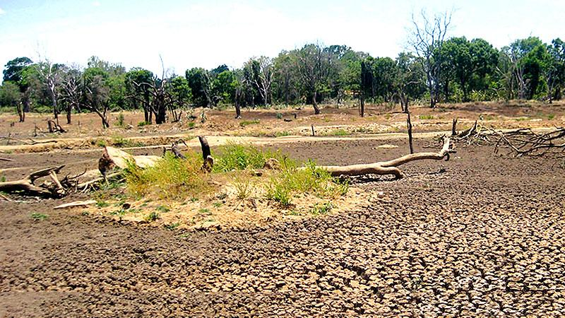 1,825 families affected by the prolonging drought, in Vavuniya , says Disaster Management Unit