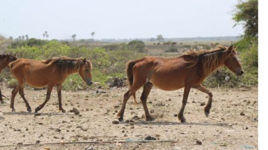 Authorities should take action to protect the Portuguese period Horses in Delft, say area people