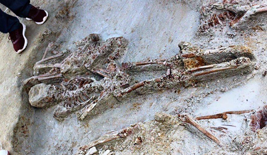 Human remains identified also in the extended excavation areas in Mannar Mass Grave