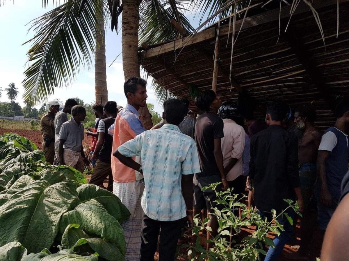 Lightning strikes coconut tree killing three, resting under it at Kupilan, Jaffna 1