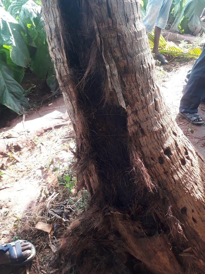 Lightning strikes coconut tree killing three, resting under it at Kupilan, Jaffna 3