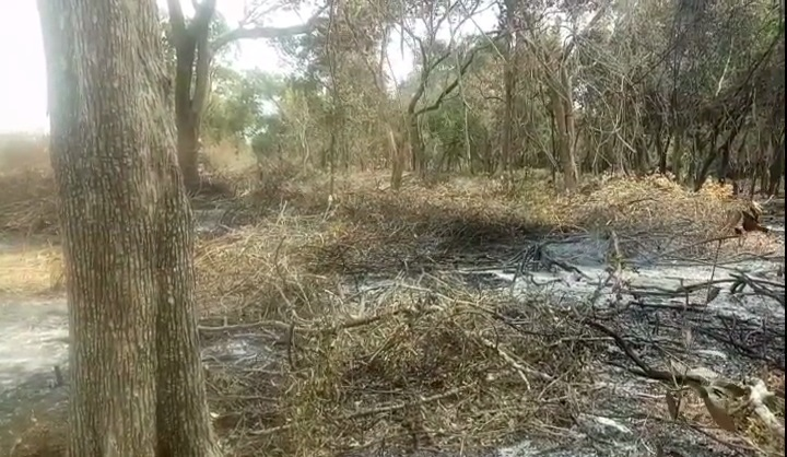 Destruction of Forests in Mulaitheevu with the connivance of officials, people express concern