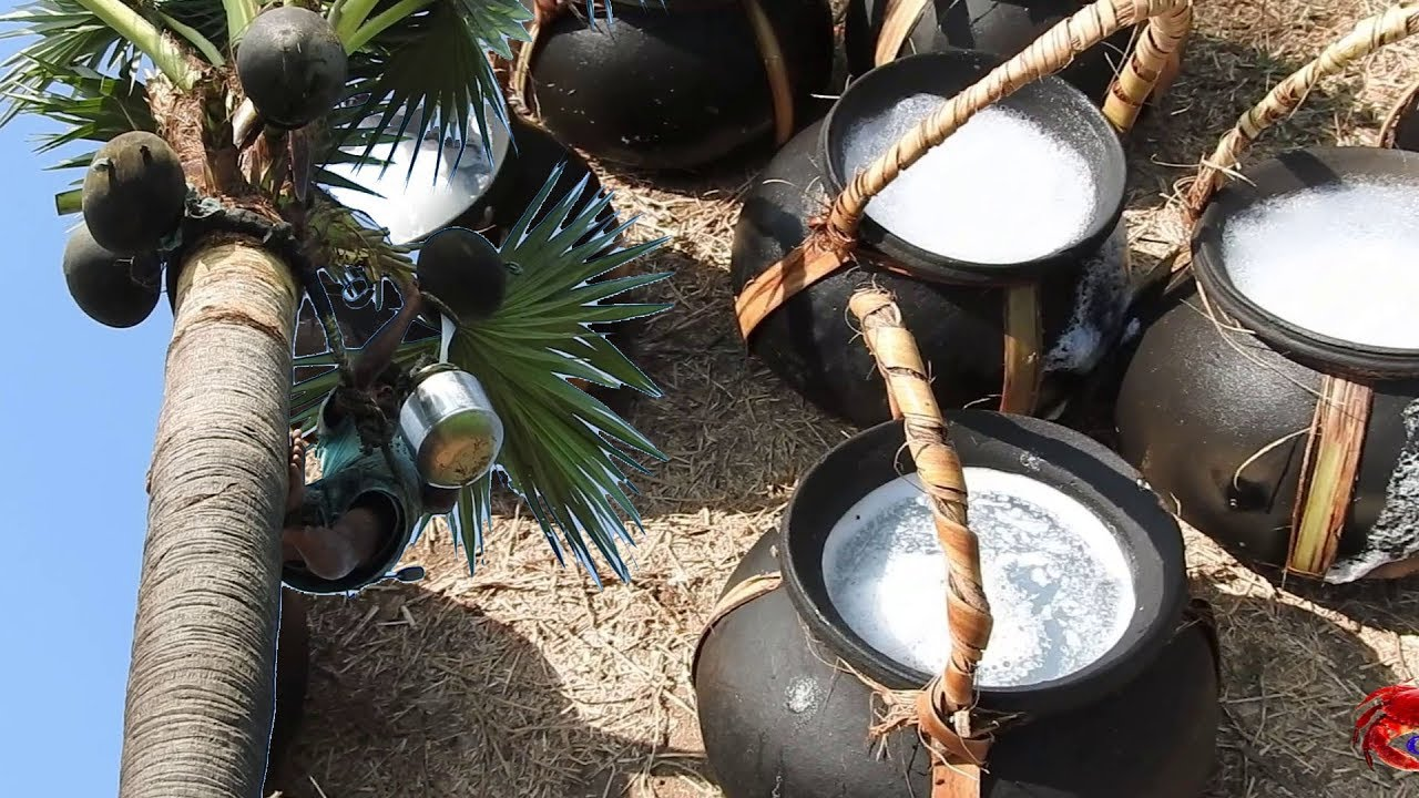 New Technology to preserve Sweet Toddy (Patha Neer) , hitherto considered impossible by Palmyrah Board