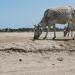 Kilinochi drought