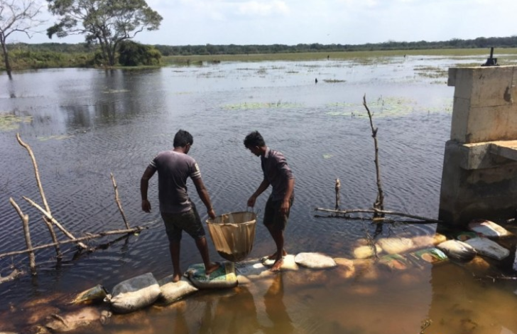 55,000 Fish- lets released in 4 tanks in Mulaitheevu – 1.5 M young prawns released in reservoirs in Jaffna