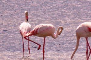 Migratory Birds Visit Jaffna after a long time 1