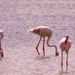 Migratory Birds Visit Jaffna after a long time