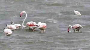 Migratory Birds Visit Jaffna after a long time 3