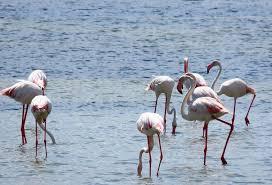 Migratory Birds Visit Jaffna after a long time 4