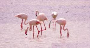 Migratory Birds Visit Jaffna after a long time 6