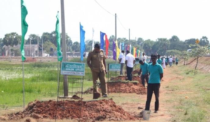 Tree planting in Nanthikadal coasts under the aegis of Karaithuraipattu Pradeshiya Sabah
