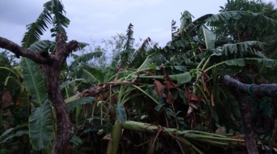 Strong winds in Mulaitheevu – 48 houses damaged