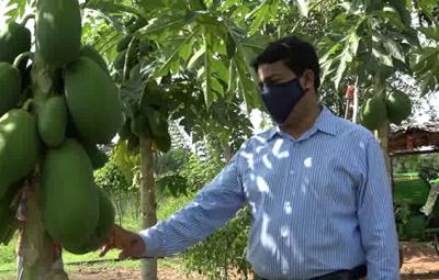 Vvuniya Papaya 1