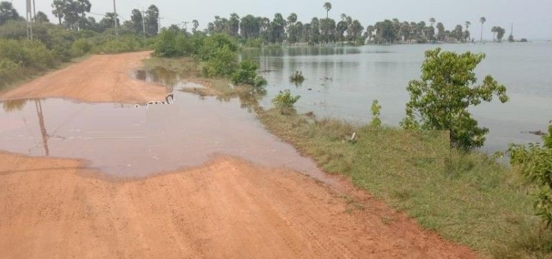 Sea water suddenly surged inland at Poonakary- 40 acres of paddy land has become saline